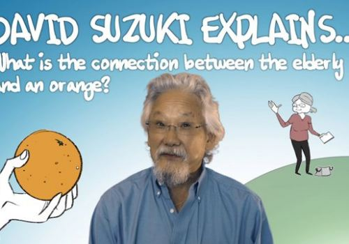 David Suzuki explains… What is the connection between the elderly and an orange?